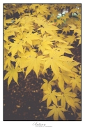 Underberg Trees 2