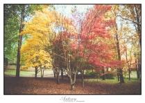 Underberg Trees 3