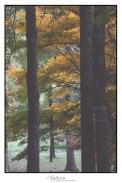 Underberg Trees