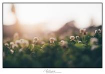 alberts-farm-september-07