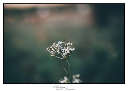 alberts-farm-spring-04