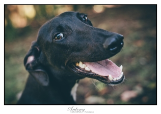 SPCA 01