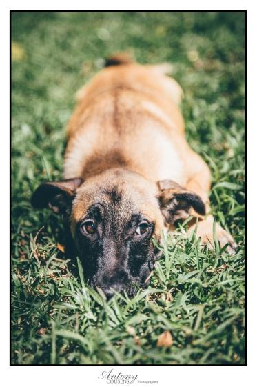 SPCA 07