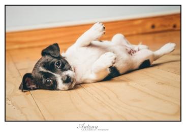 SPCA 08