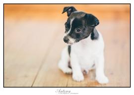 SPCA 10