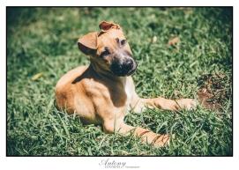 SPCA 11