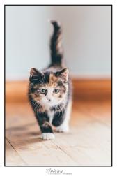 SPCA 12