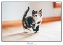 SPCA 13