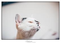 SPCA 14