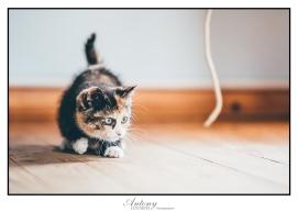 SPCA 15