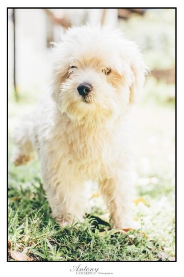 SPCA 17