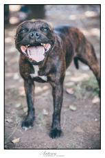SPCA 18