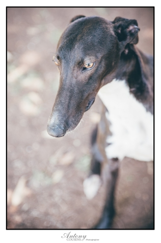 SPCA 19
