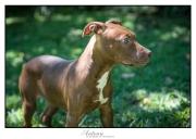 SPCA F01